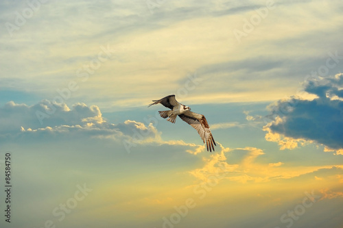 Photo  Osprey flying in clouds at sunset