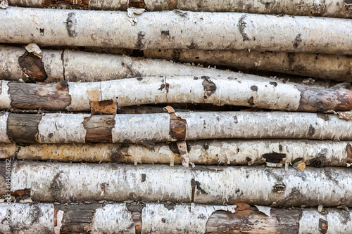 Background of the old birch logs