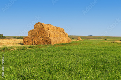Fotografia, Obraz  Yellow rick of hay on the meadow