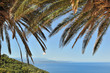 feuilles de palmier sur fond ciel et mer