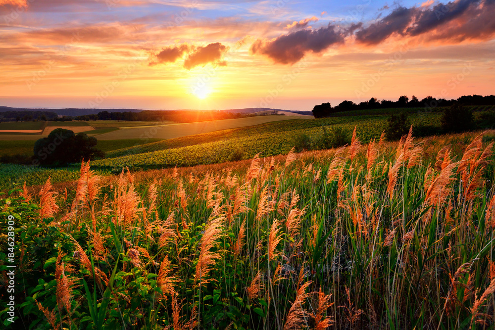 Fototapety, obrazy: The setting sun paints the sky and vegetation red