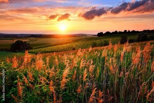 Obraz Zachodzące słońce maluje niebo i roślinność na czerwono - fototapety do salonu