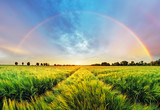 Fototapeta Rainbow - Rainbow Rural landscape with wheat field on sunset