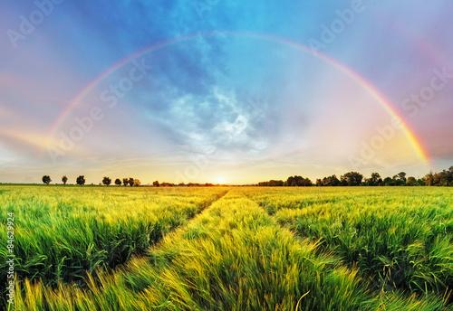 obraz dibond Krajobrazu wiejskiego z tęczy na polu pszenicy o zachodzie słońca