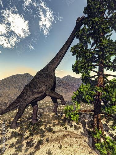 Photo  Brachiosaurus dinosaur eating wollomia pine - 3D render