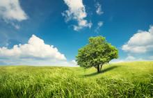 Tree On The Field. Beautiful Summer Landscape.
