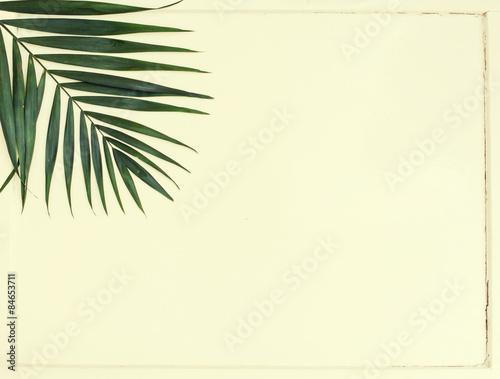 Fototapeta areca palm leaves obraz na płótnie