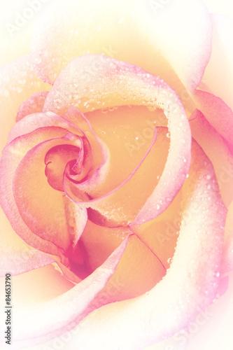 roza-z-kroplami-wody-na-platkach-lekki-ton-pionowy-obraz