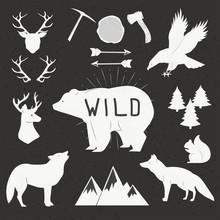 Hand Drawn Wild Animals And Ob...