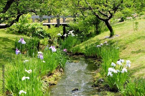 Photo 小川と花菖蒲