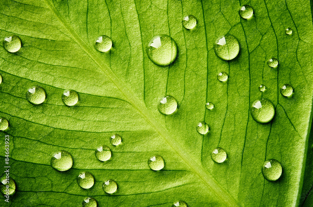 Fototapeta Green leaf with drops of water