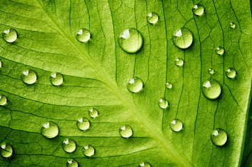 FototapetaGreen leaf with drops of water