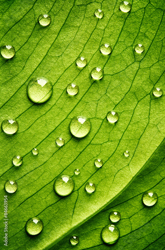 Green leaf with drops of water - 84663954