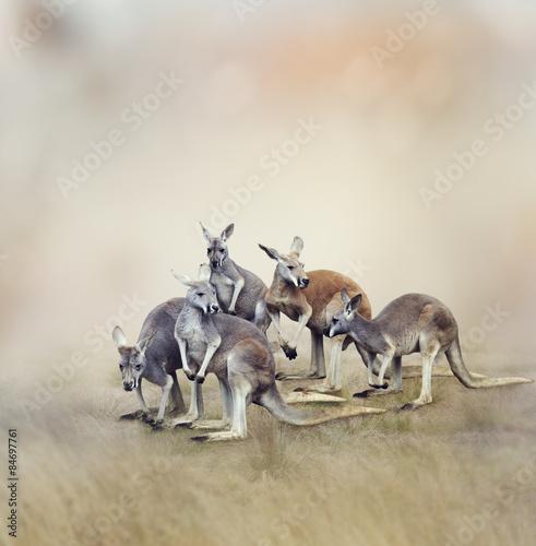 Fotobehang Kangoeroe Kangaroos