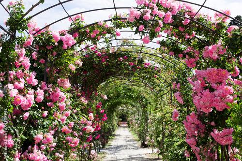 Fotobehang Tuin romantic rosebed walk