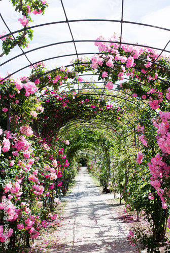 Fotobehang Tuin romantic path into a luxuriant rose garden