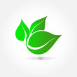 Eco icon, green leaf vector, illustration isolated