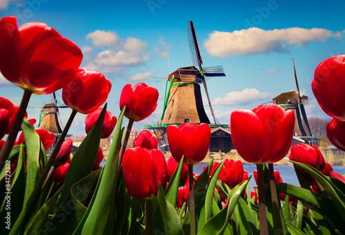 Obraz Słynne holenderskie wiatraki - fototapety do salonu