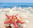 Starfish and seashells on sandy beach