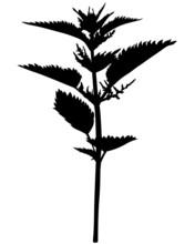 Silhouette Nettle Flower