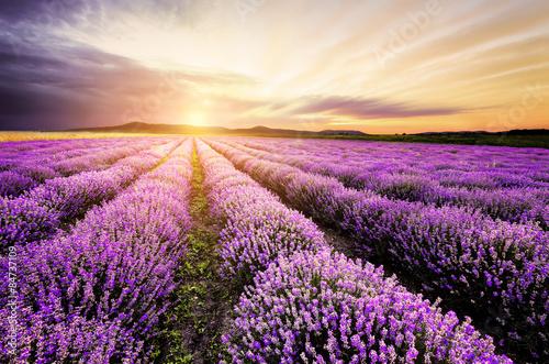 Foto op Aluminium Lavendel Lavender Sunrise