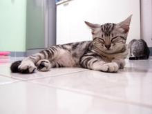Image Of Kitten Sleeping, Imag...