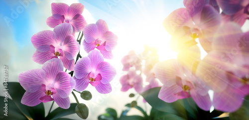 Recess Fitting Orchid Orchideen im Sonnenlicht