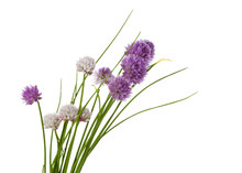 Blooming Chives Isolated On White