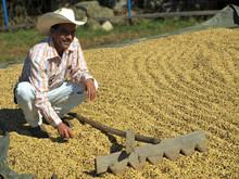 Coffee Producer With Coffee Su...