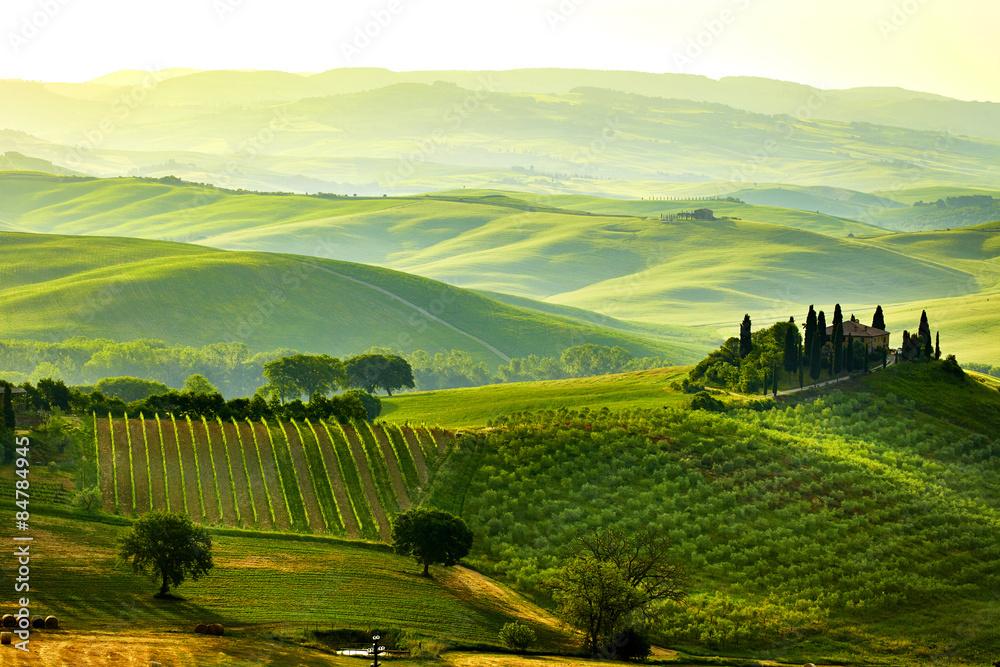 Fototapety, obrazy: Zielone wzgórza Toskanii