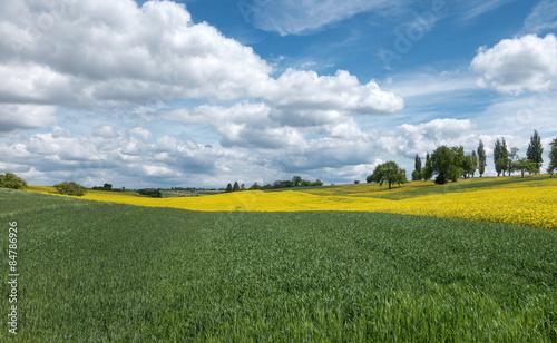 Cadres-photo bureau Jaune Grüne und gelbe Felder mit Wolkenlandschaft