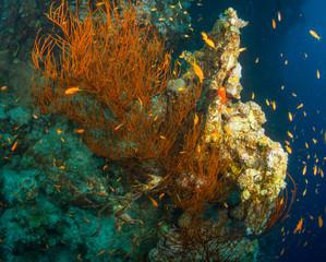 Fototapeta na wymiar Tropical fish