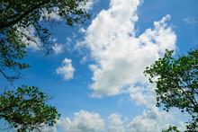 Heart Shape Cloud With Tree Frame