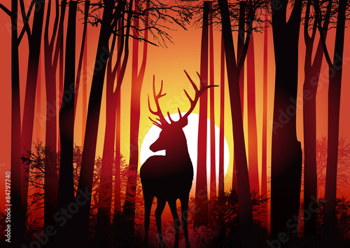cerf-foret-chasse-nature