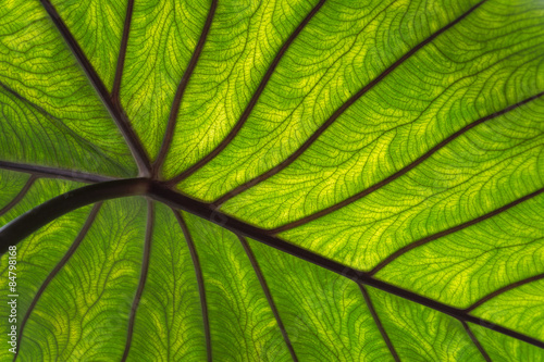 Garden Poster Nature Close-up groen blad met nerven