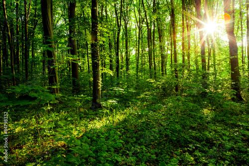 Fotobehang Bossen forest trees