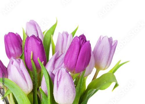 bukiet-fioletowy-tulipan