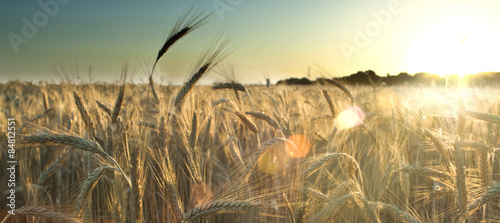 Fotobehang Platteland Wheat field on the sunrise of a sunny day