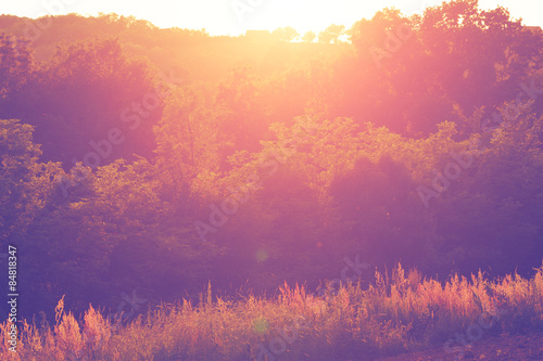 Photo sur Toile Prune Forest with sun flare.