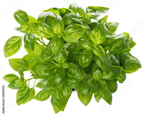 Obraz Raw Basil, view from above - fototapety do salonu