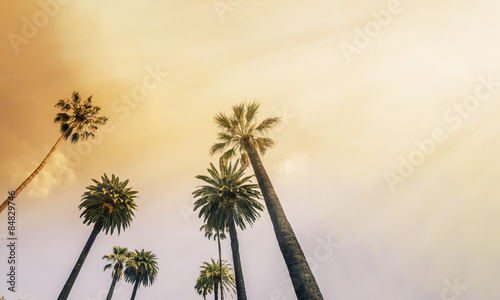 Tuinposter Palm boom Los Angeles, West Coast Palm Tree Sunshine