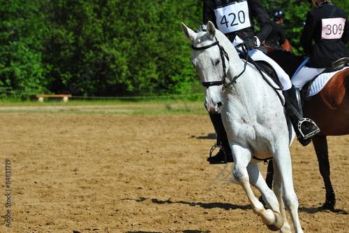 Fotobehang Paardrijden équitation