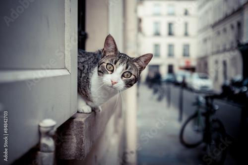 Fotomural chat curieux fenêtre ville