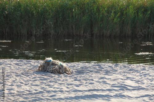 Fotografie, Obraz  Tangled fishing nets on the beach
