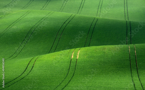 Foto op Plexiglas Groene Green rolling hills of wheat that resemble corduroy with lines stretching into the distance.