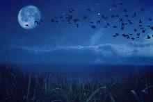 Night Background Concept Migratory Birds