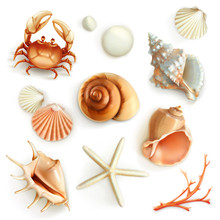Seashells, Set Vector Icons