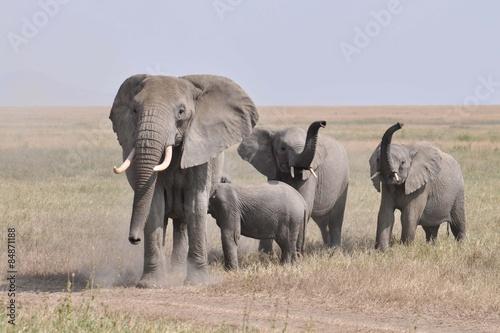 Garden Poster Nature Kudde geirriteerde boze olifanten komt op de camera aflopen