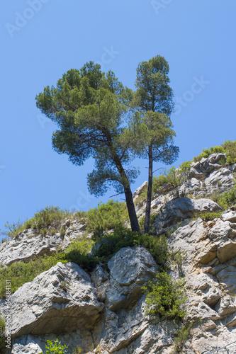 Fotografie, Obraz  Baum auf Felsen, Gemenos, Frankreich