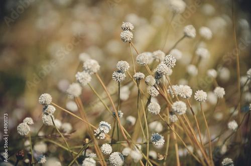 rocznik-kwiaty-kolor-tlo-sciana-zielony-przyroda-swiatlo